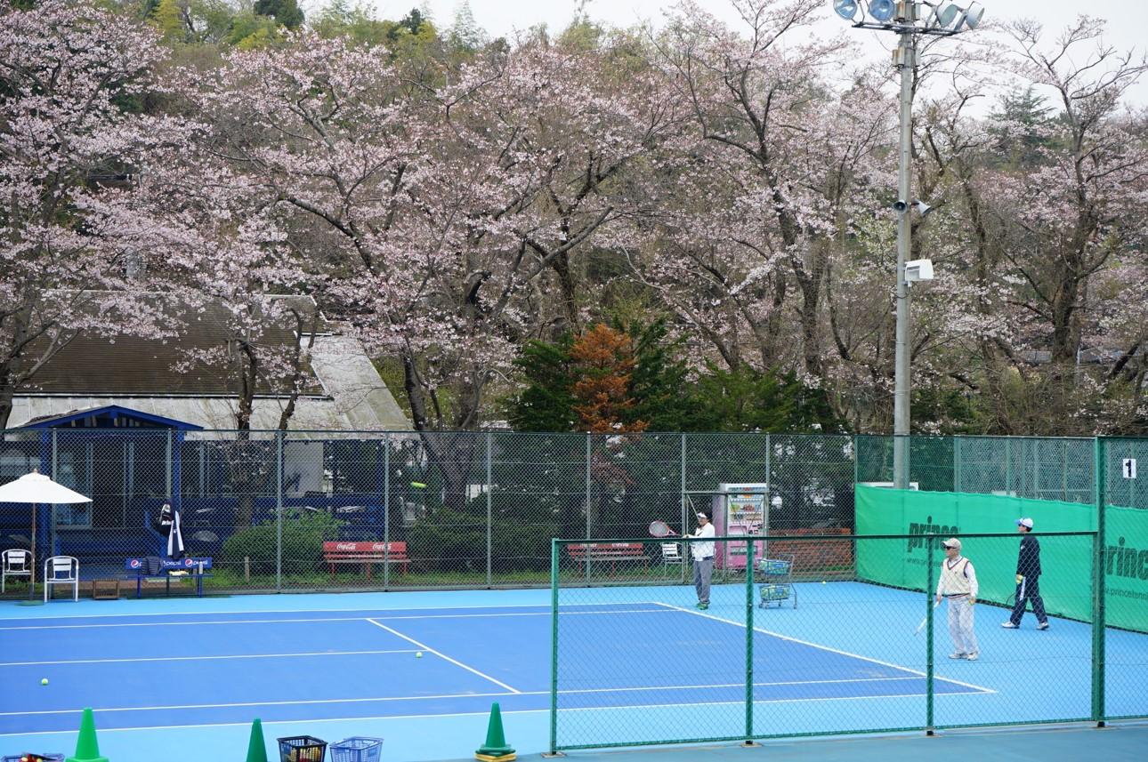 パーム 桜